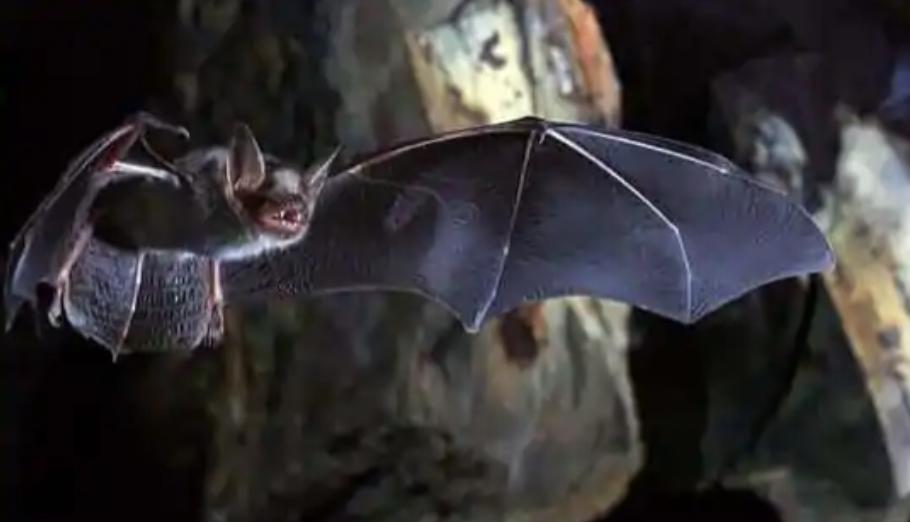 Cave bat thesis top admission essay ghostwriter websites uk